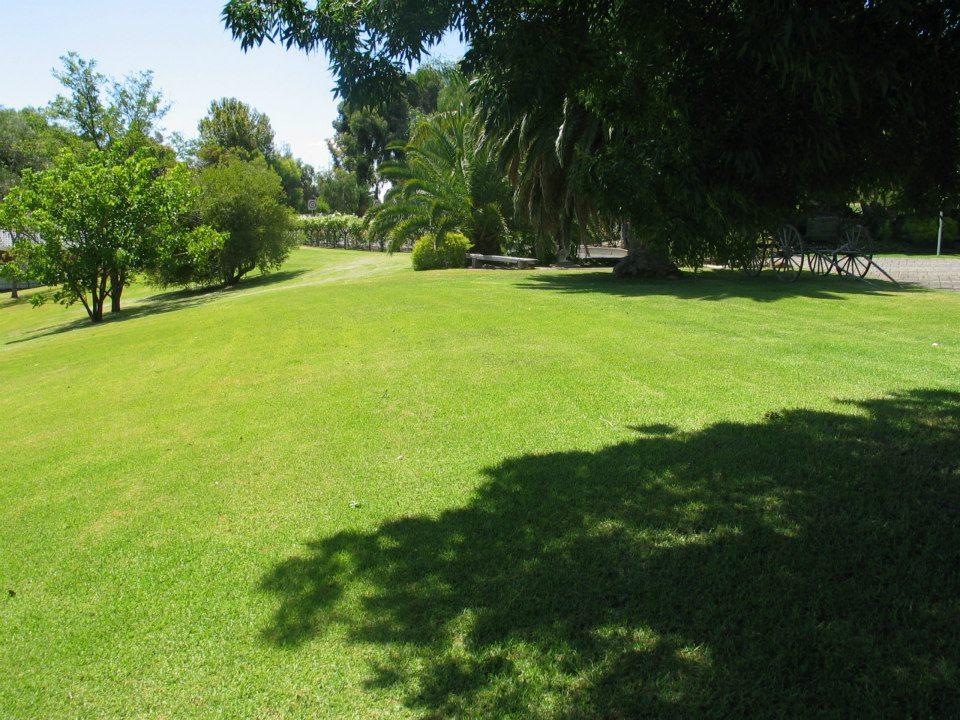 beautiful lawns
